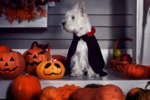 best streets for trick or treating in Westchester